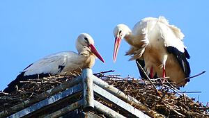 storch_240221